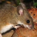 Мышка по имени Сво...